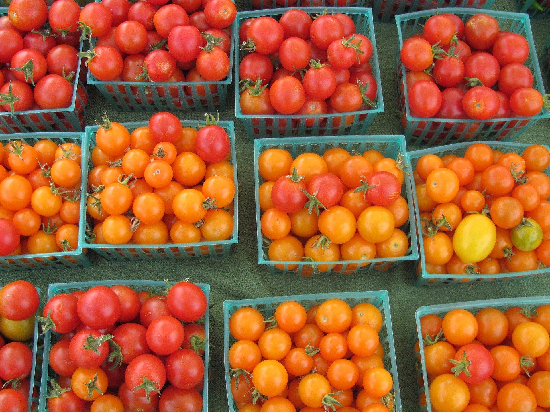 tomatoes-2087342_1920